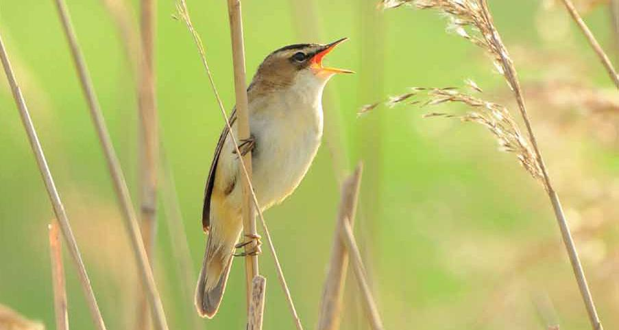 10x actief: vogelconcerto's