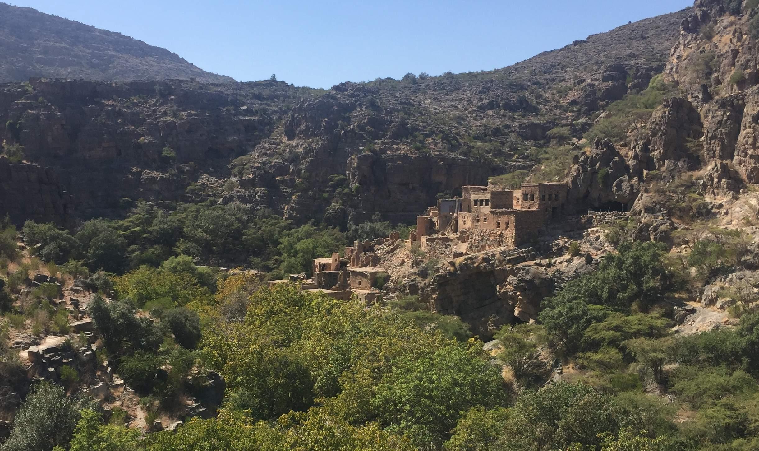Aride vegetatie in Oman