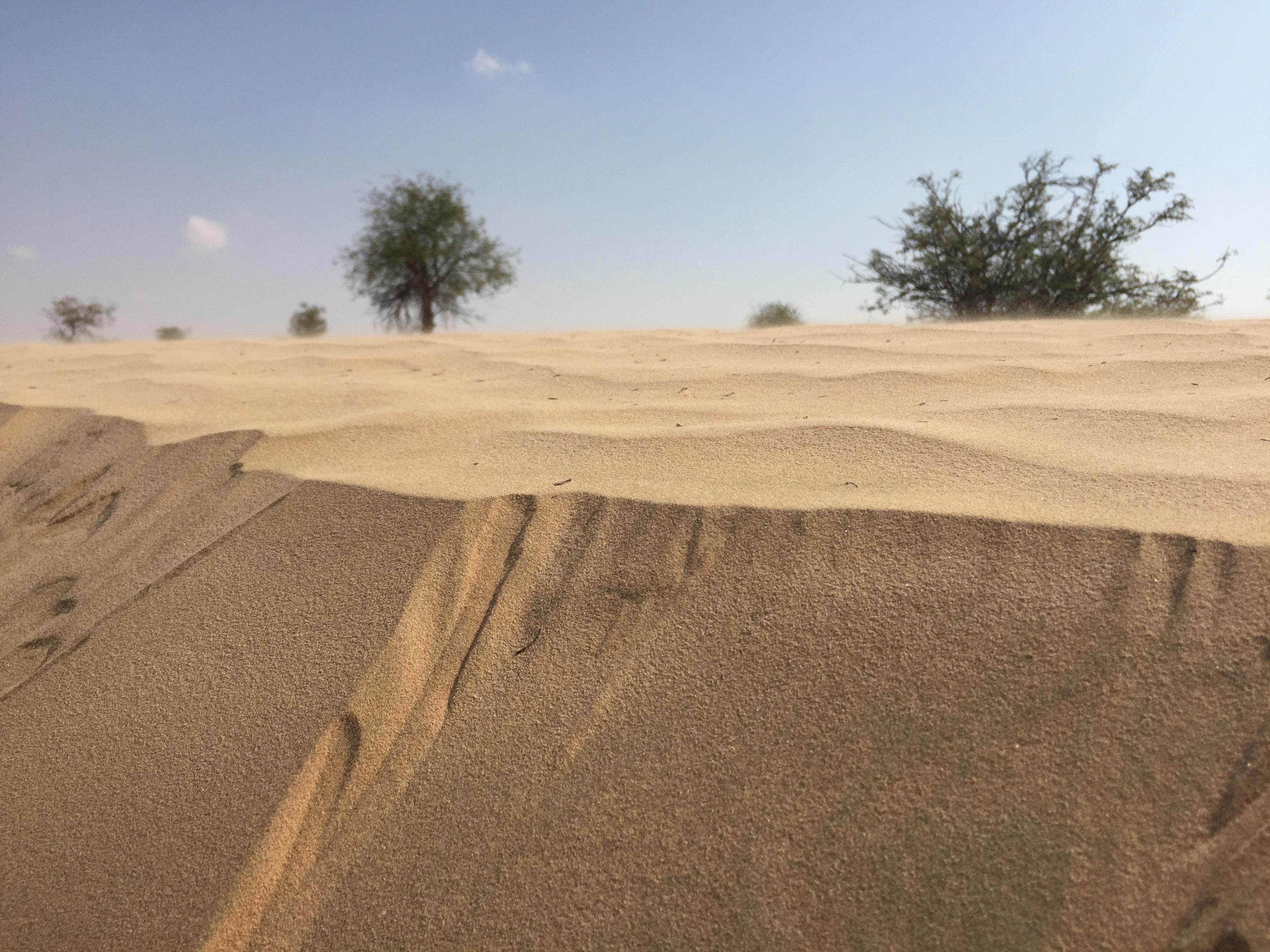 Zand in Oman. Zand. In. Oman. Wie had dat gedacht?