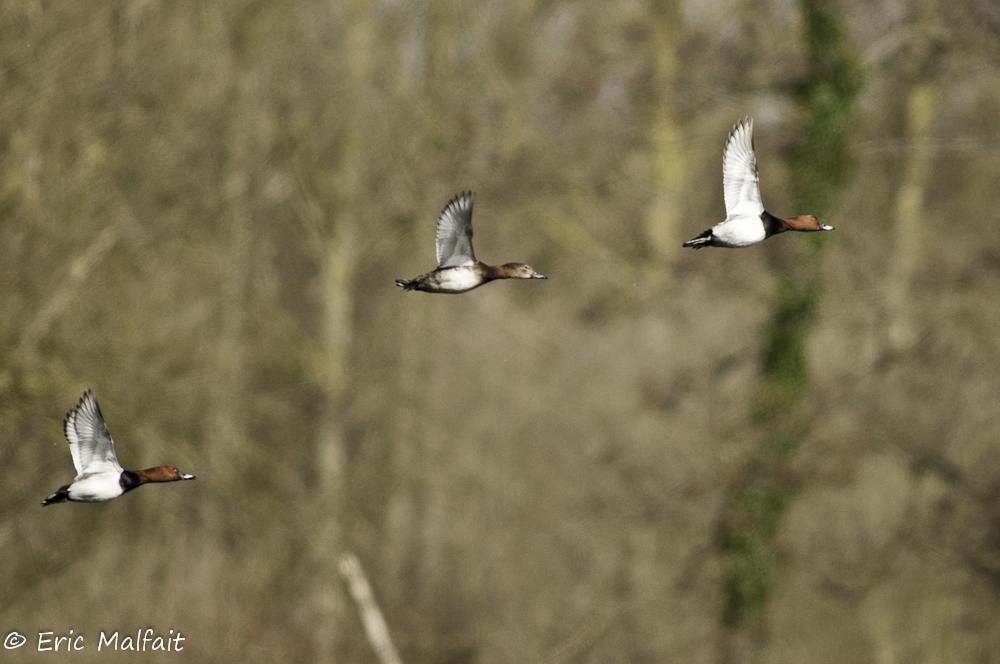 Watervogels kijken op de vijver aan de vogelkijkhut
