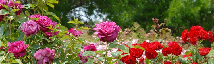 Plant heel veel bloemen