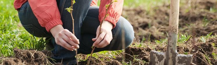 Plant een boom, struik of klimplant