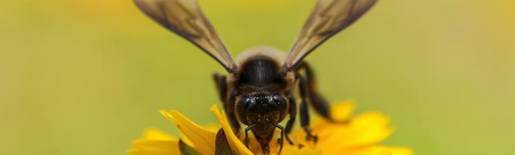Ga aan de slag voor wilde bijen in je tuin