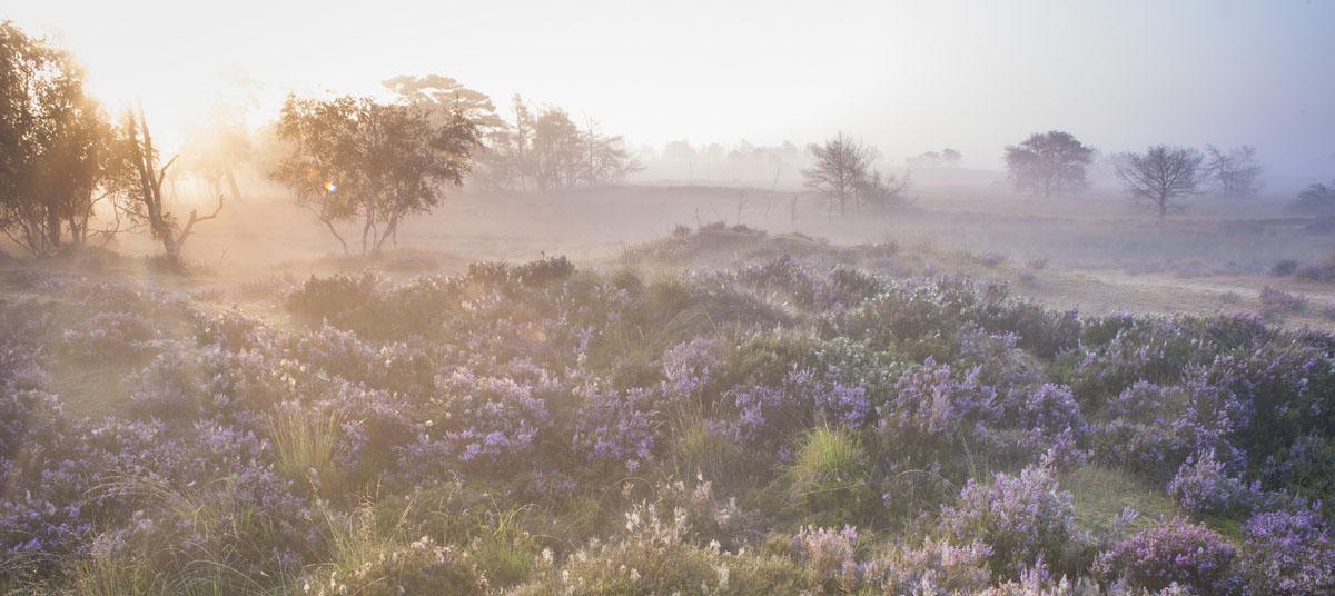 Overweeg je om een belangrijke gift te doen voor de natuur? Dan moet het goed zijn. Je wilt een project steunen dat perfect aansluit bij wat je beweegt.