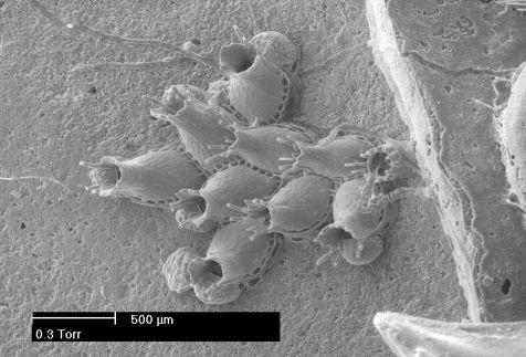 Mosdiertjes zijn kleiner dan een millimeter