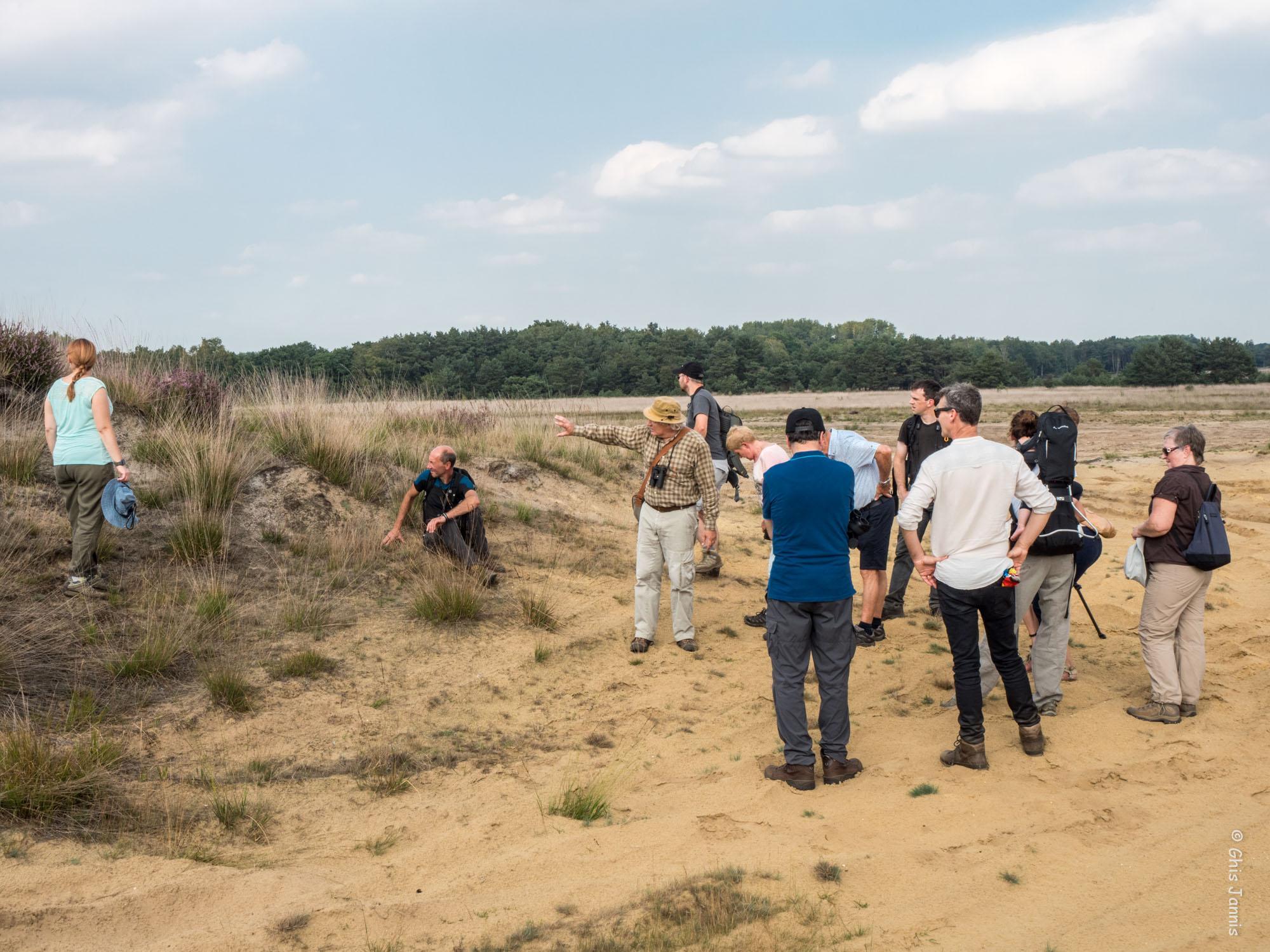 Heidewandeling , militair domein Hechtel , 27 augustus 2017 - foto 2