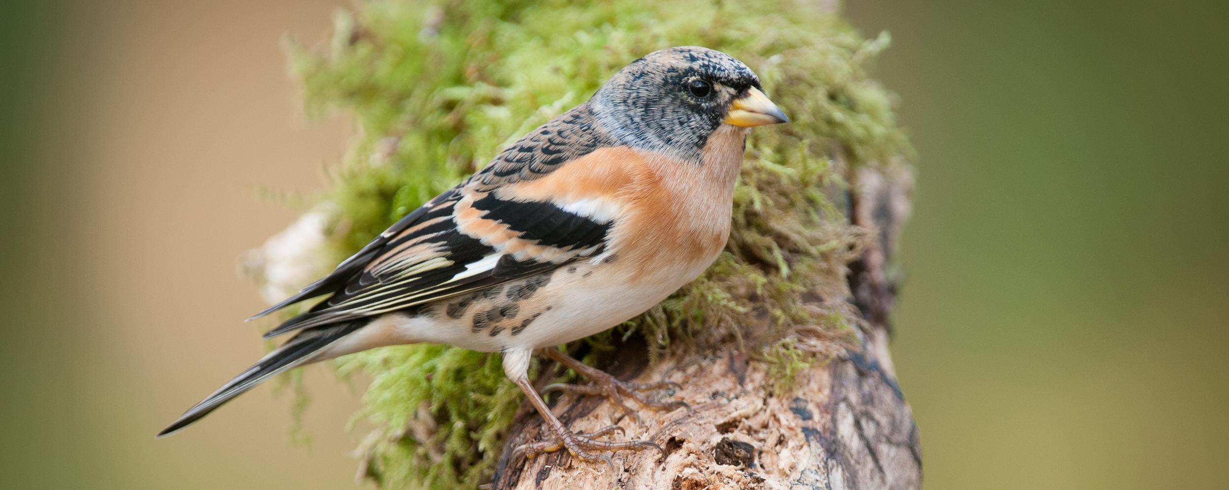 Betere Een vogelvriendelijke tuin | Natuurpunt VX-37