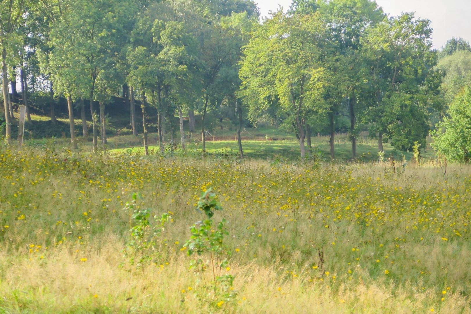 Kesterheide graslanden