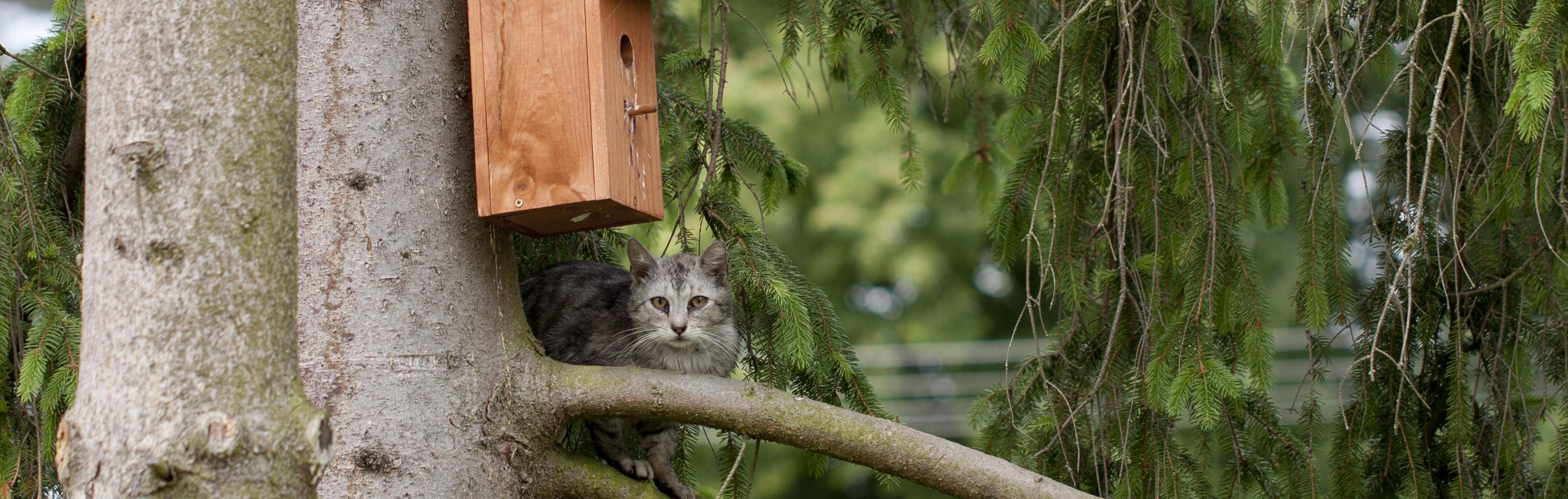 Bescherm je tuinvogels voor katten
