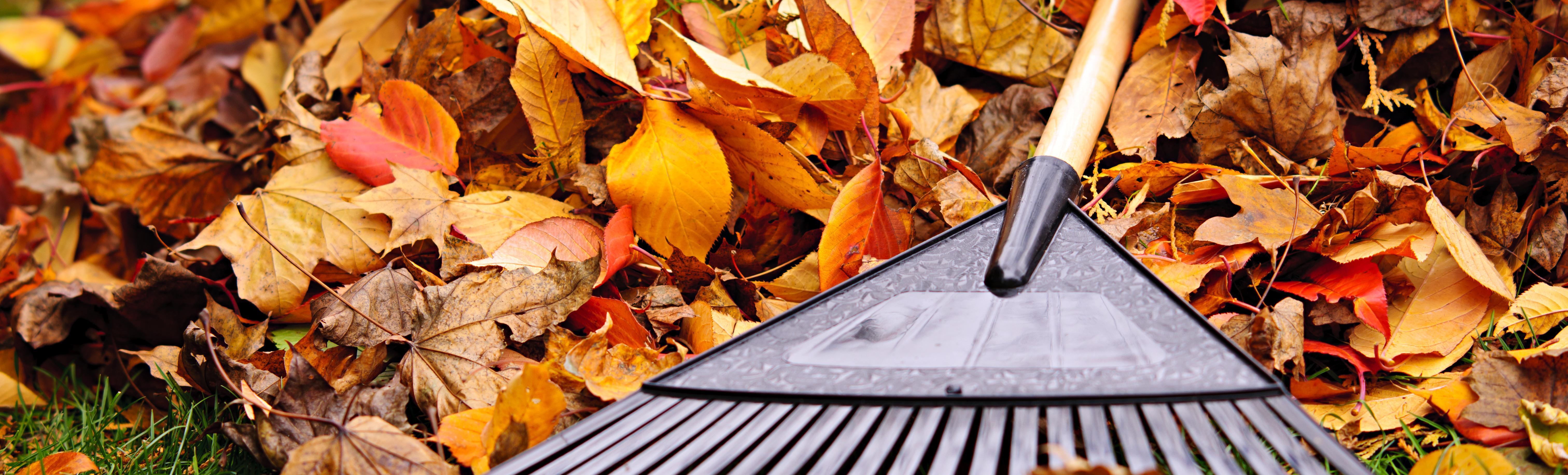 Tuinieren in de herfst - Shutterstock