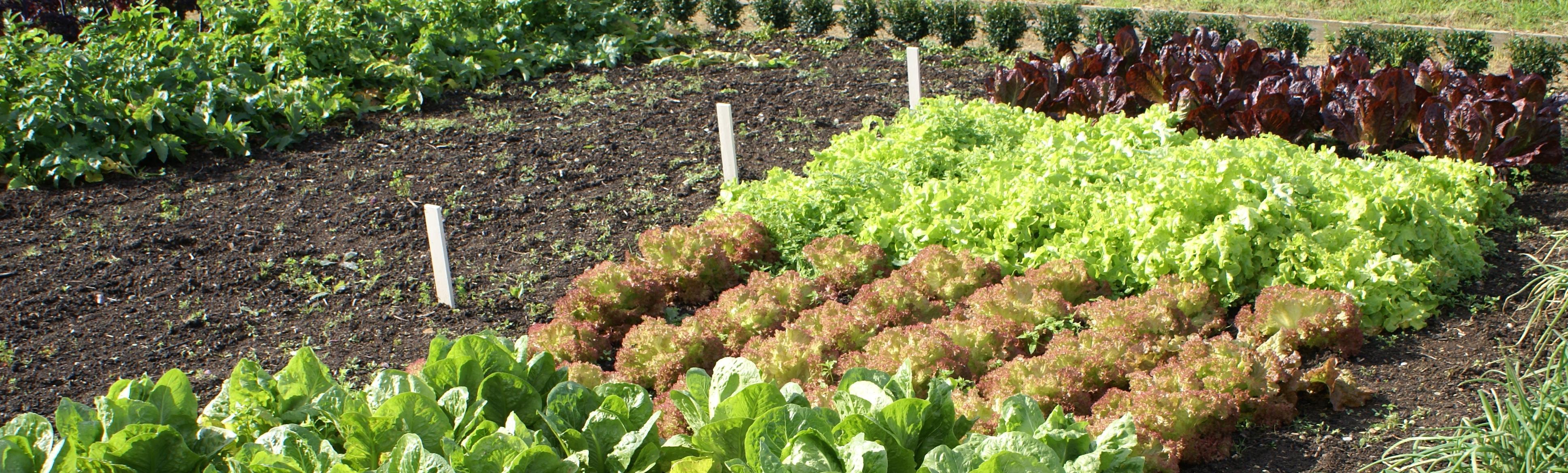 Hoe maak ik een natuurlijke moestuin natuurpunt - Maak een eigentijdse tuin aan ...