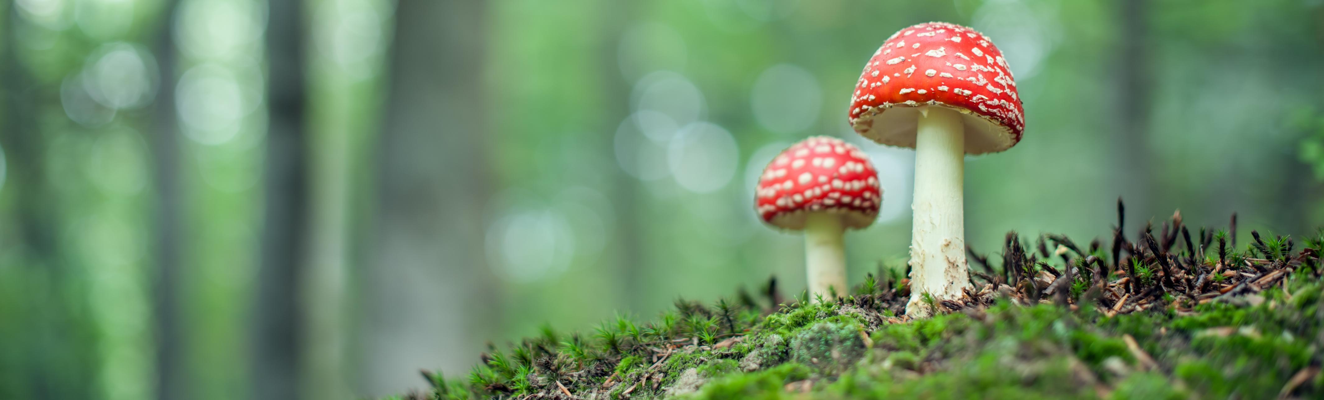 Laat paddenstoelen toe in je tuin