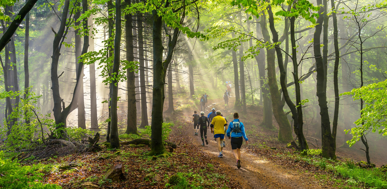 Trailrunnen in Vlaanderen - Shutterstock