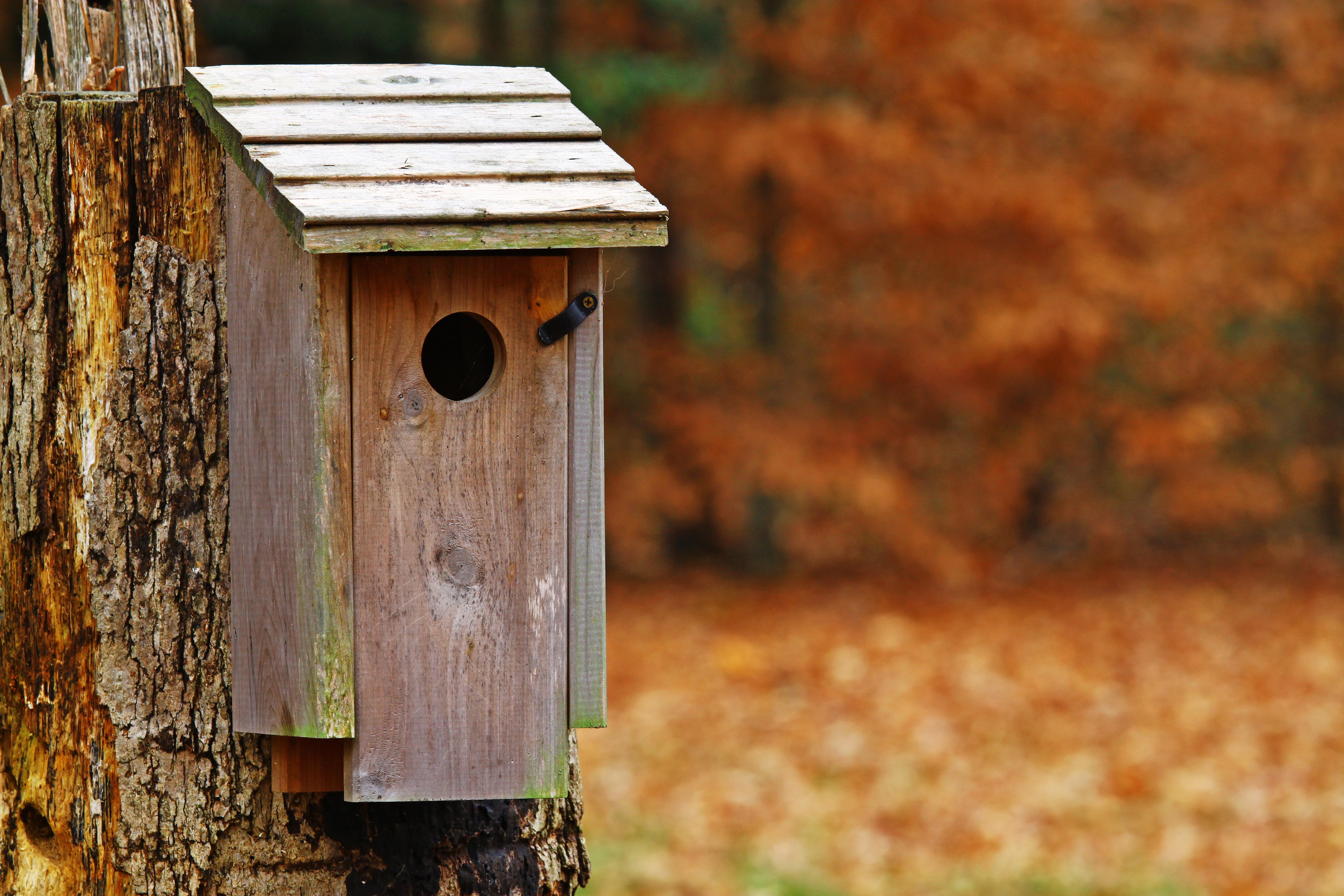 Hang een nestkast op voor vogels in je tuin