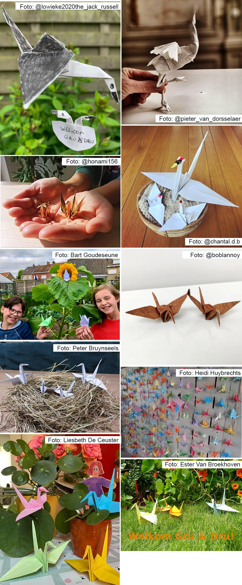 Winnaars origami wedstrijd kraanvogels Gru & Dru - Natuurpunt