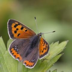 Vraag je gratis vlindergids aan vol praktische en haalbare tips om meer vlinders in je tuin te krijgen.
