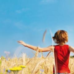 3% graanvelden met wilde bloemen ingezaaid