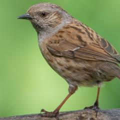 Leer je tuinvogels herkennen