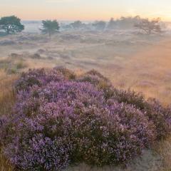 Kaltmhoutse Heide