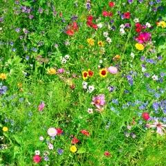 Naturem steunt het Grote Vlinderweekend