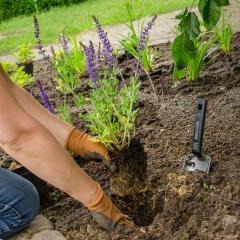 Maak je tuin natuurvriendelijker