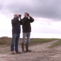 """VRT - Franse vogelbeschermers: """"Akkervogels komen steeds minder voor"""""""