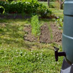 Hoe ga je om met droogte in de tuin?