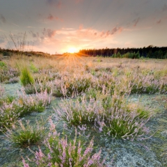 Averbode Bos en Heide - Natuur.blad 2017-3 - Vilda - Jeroen Mentens