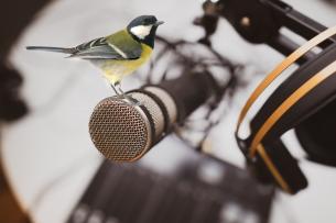 Het natuurgeluid - Joeri Cortens - Podcast