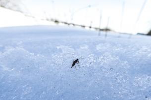 Sneeuwvlo