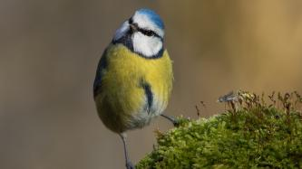 illustratie vogeltelweekend