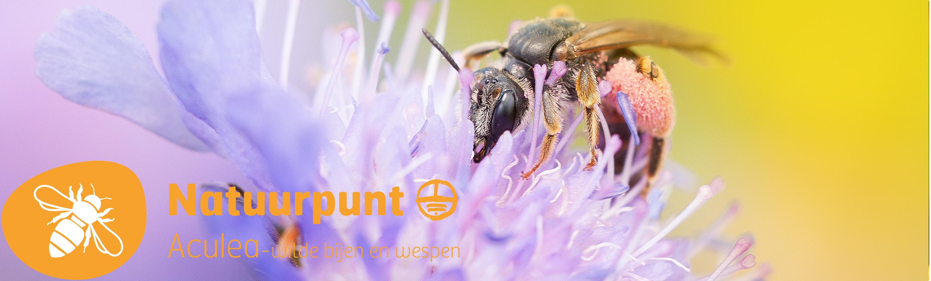 Aculea - Werkgroep wilde bijen en wespen
