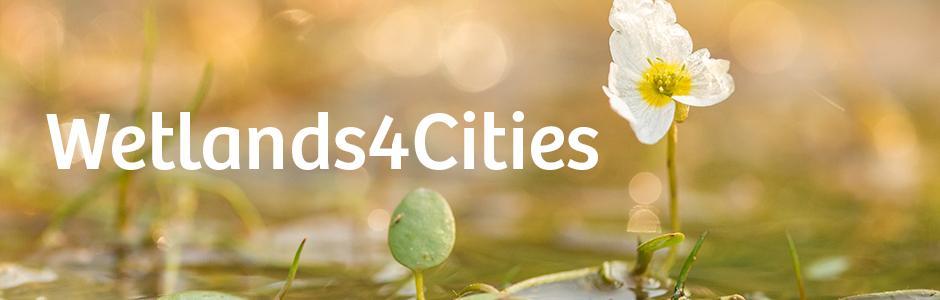 Wetlands4Cities
