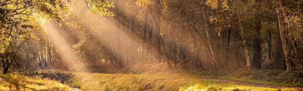 Geniet van de herfst, duik het bos in! Foto: Munsterbos - Yves Zielinski
