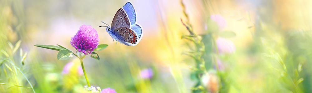 Tel de vlinders in je tuin met De Grote Vlindertelling van Natuurpunt - 3 tot 15 juli 2021 - www.vlindertelling.be