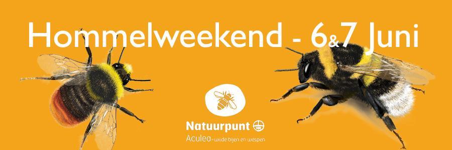 Aculea organiseert een hommelweekend op 6 en 7 juni.