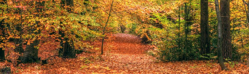 Geniet van de herfst in het bos - shutterstock
