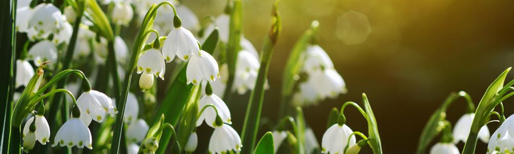 Trek de natuur in. Ontdek de prille voorjaarsbloeiers.