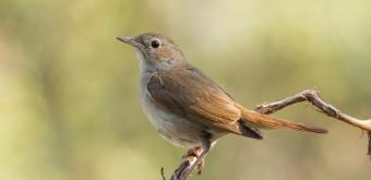 Goede Vogels herkennen | Natuurpunt GA-04