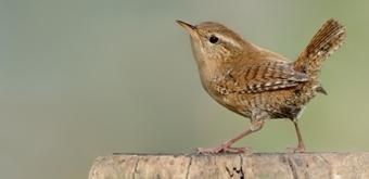 Fonkelnieuw Vogels herkennen   Natuurpunt AP-66