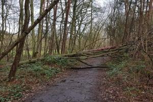 20190311 Stormschade NP Keerbergen