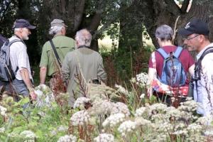 Activiteit Vlinderweekend in Steenhuffel