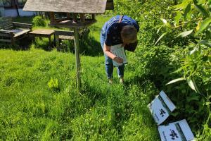 Mirella telt het aantal bloemen op het picknickeiland