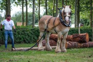 Trekpaard op de Wijngaardberg