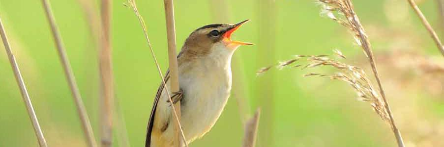 10x actief: vogelconcerto