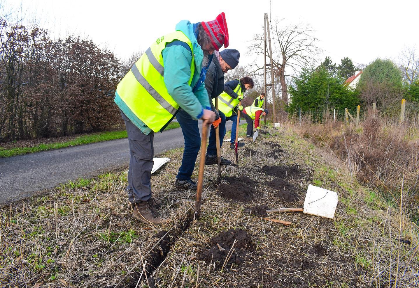 Vrijwilligers Natuurpunt Rupelstreek en medewerkers Cummins plaatsen paddenschermen langs de Doornlaarlei in Rumst - foto: Yente De Maesschalck