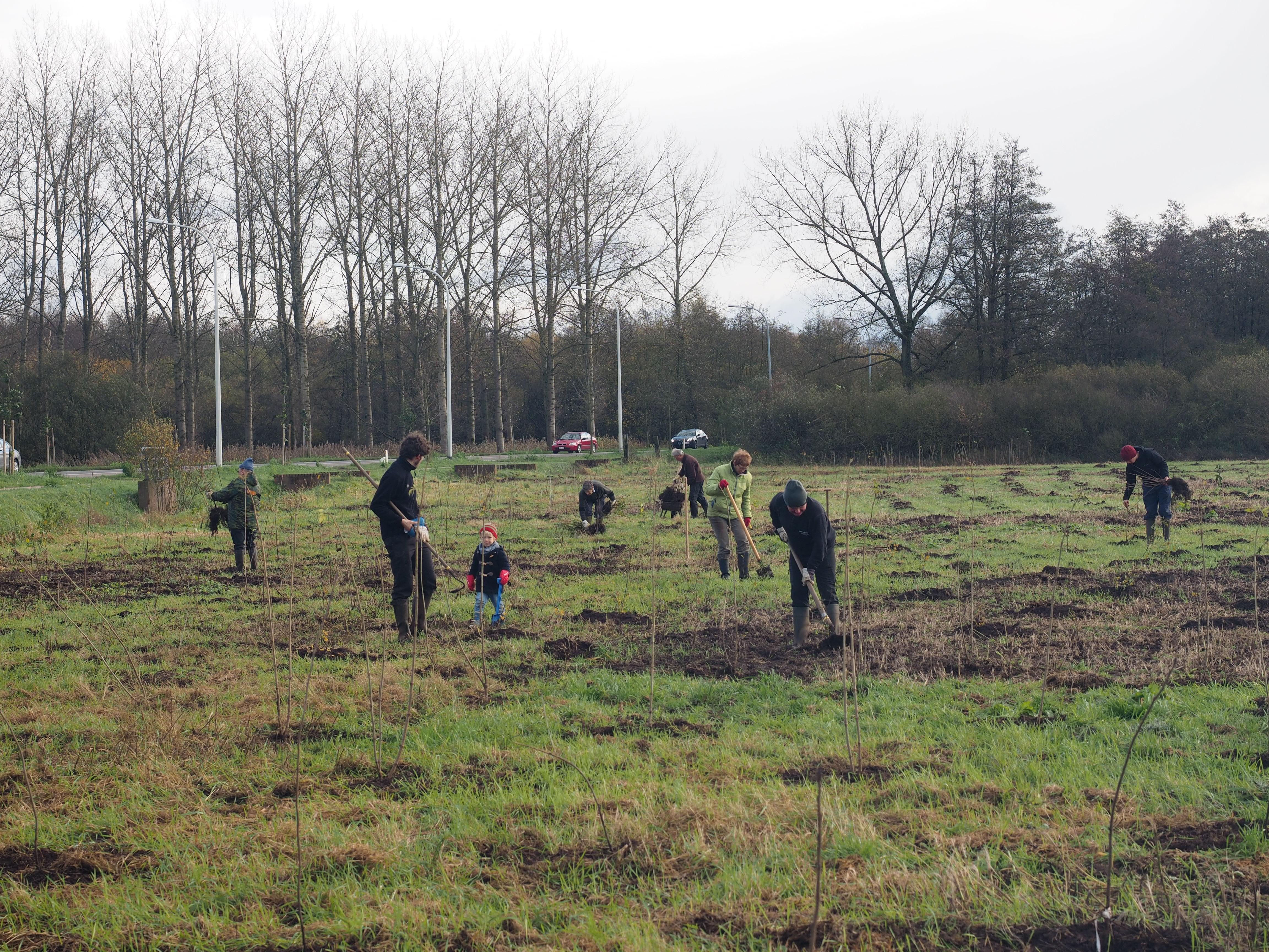 Planten En Bomen : Scholen en jeugdbewegingen planten 9.000 bomen in het grote netewoud