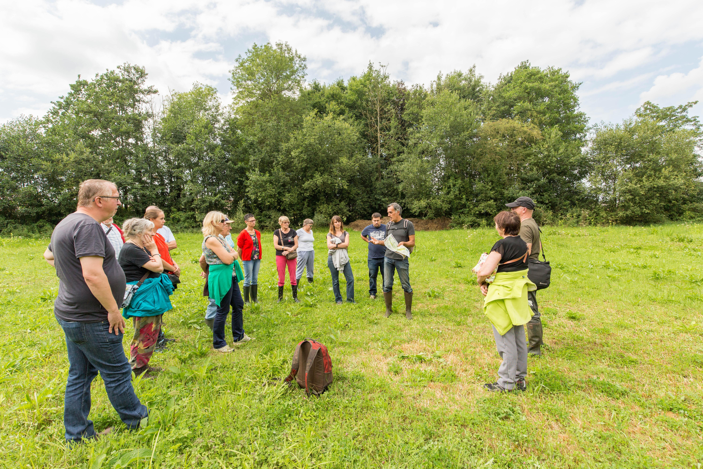 Graslandherstel in natuurreservaat De Spicht