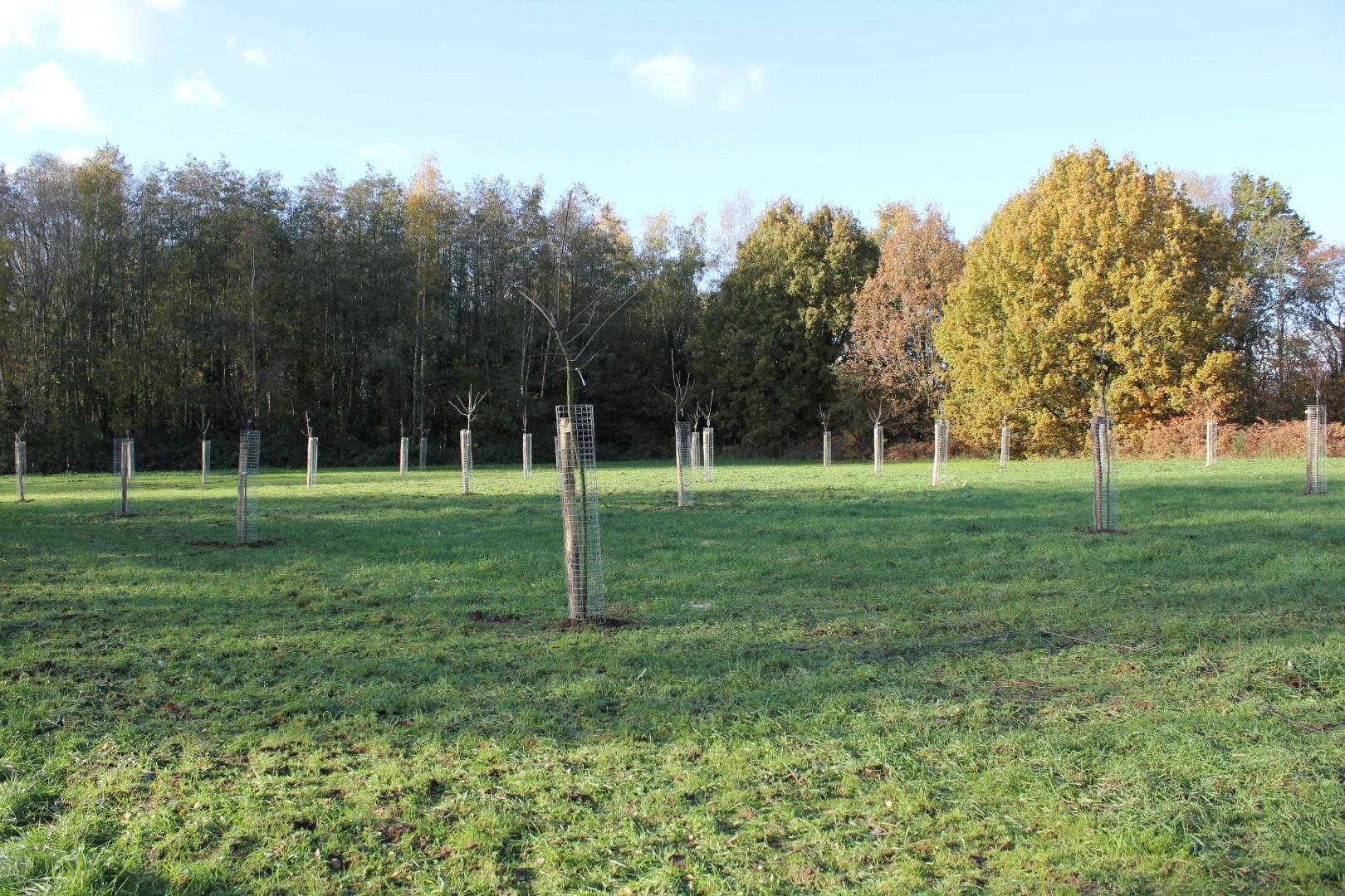 Aanplanting Fruitbomen