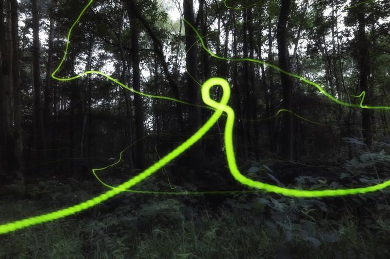 Kleine glimworm